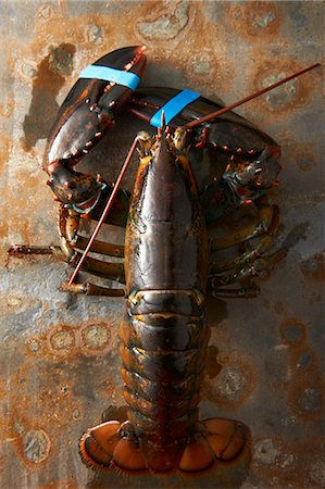 Lobster with claws taped Stock Photo - Premium Royalty-Free, Code: 649-07436468