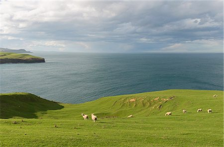 Sheep grazing on coastal pasture, Dunedin, Otago, South Island, New Zealand Stock Photo - Premium Royalty-Free, Code: 649-07436599