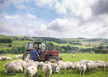 farming (raising livestock) - Farmer in tractor with son watching sheep in field Stock Photo - Premium Royalty-Free, Code: 649-07437065