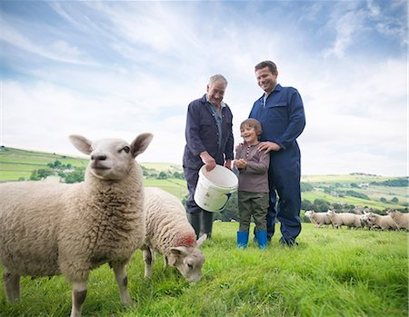 Mature farmer, adult son and grandson feeding sheep in field Stock Photo - Premium Royalty-Free, Code: 649-07437075