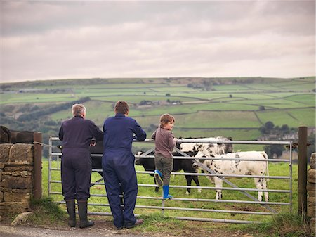farming (raising livestock) - Mature farmer, adult son and grandson leaning on gate to cow field, rear view Stock Photo - Premium Royalty-Free, Code: 649-07437077