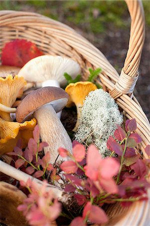 fungus - Basket of mushrooms and autumnal leaves Stock Photo - Premium Royalty-Free, Code: 649-07437094