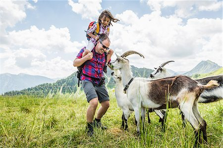 fun - Father and daughter with goats, Tyrol, Austria Stock Photo - Premium Royalty-Free, Code: 649-07437723
