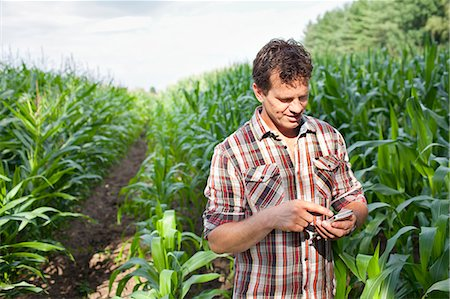 farm phone - Farmer standing in field of crops using smartphone Stock Photo - Premium Royalty-Free, Code: 649-07437979