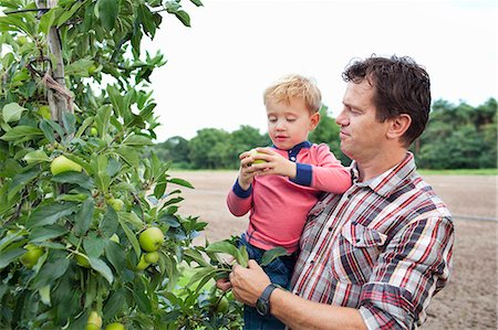 family apple orchard - Farmer and son picking apples from tree in orchard Stock Photo - Premium Royalty-Free, Code: 649-07437982