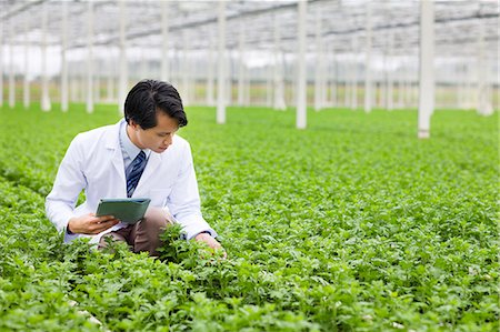 Scientist in rows of plants in greenhouse, holding digital tablet Stock Photo - Premium Royalty-Free, Code: 649-07438029