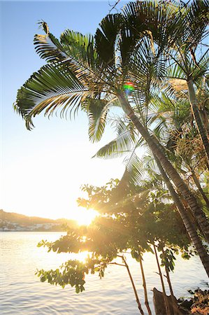 palm - Palm trees and sunlight, Castries, St Lucia, Caribbean Stock Photo - Premium Royalty-Free, Code: 649-07520849