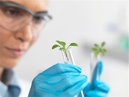 Scientist viewing seedling in test tubes under trial in lab Stock Photo - Premium Royalty-Free, Code: 649-07596077