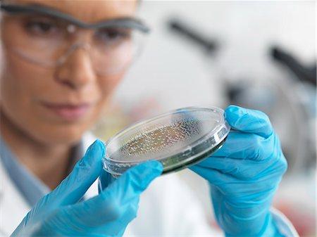 Female scientist examining micro organisms in petri dish Stock Photo - Premium Royalty-Free, Code: 649-07596086