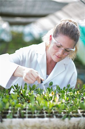 Female scientist feeding plant samples with pipetted liquid Stock Photo - Premium Royalty-Free, Code: 649-07761199