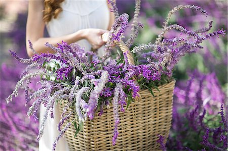 purple - Cropped shot of young woman in garden carrying basket of purple flowers Stock Photo - Premium Royalty-Free, Code: 649-07761215