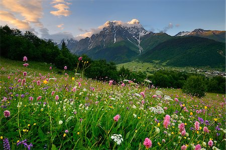 snow capped - Meadow with wildflowers, Mazeri village, Svaneti, Georgia Stock Photo - Premium Royalty-Free, Code: 649-07804956