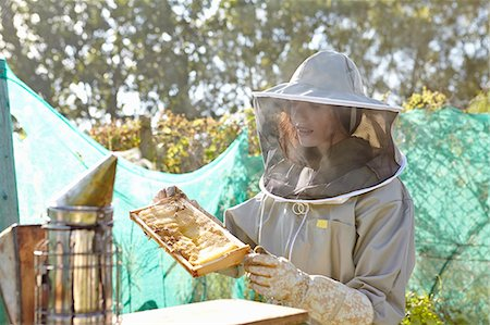 Female beekeeper looking at honeycomb tray on city allotment Stock Photo - Premium Royalty-Free, Code: 649-07803950