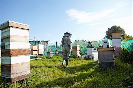 Women beekeepers working on city allotment Stock Photo - Premium Royalty-Free, Code: 649-07803952