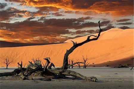 Fallen dead tree and sand dunes, Deaddvlei, Sossusvlei National Park, Namibia Stock Photo - Premium Royalty-Free, Code: 649-07905411
