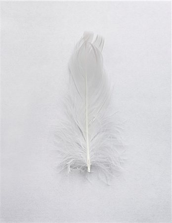 feather  close-up - White feather on white background Stock Photo - Premium Royalty-Free, Code: 649-08084514
