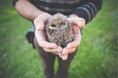 Man holding hedgehog Stock Photo - Premium Royalty-Free, Code: 649-08085370