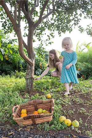 selecting - Young woman and toddler daughter harvesting fresh oranges in garden Stock Photo - Premium Royalty-Free, Code: 649-08085836