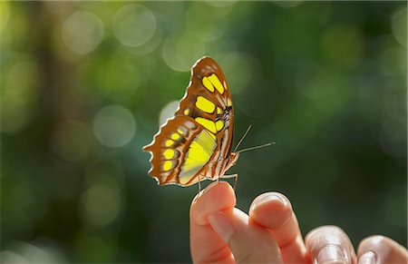 Butterfly on woman's finger Stock Photo - Premium Royalty-Free, Code: 649-08085871