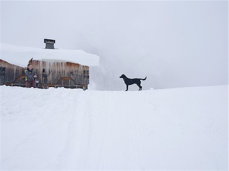 dogs in nature - Dog on snow-covered landscape, Flaine, France Stock Photo - Premium Royalty-Free, Code: 649-08144762