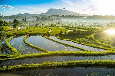 Rice fields, Bali, Indonesia Stock Photo - Premium Royalty-Free, Code: 649-08180302