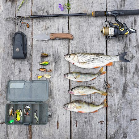 Overhead still life of four caught fish and fishing equipment Stock Photo - Premium Royalty-Free, Code: 649-08180482