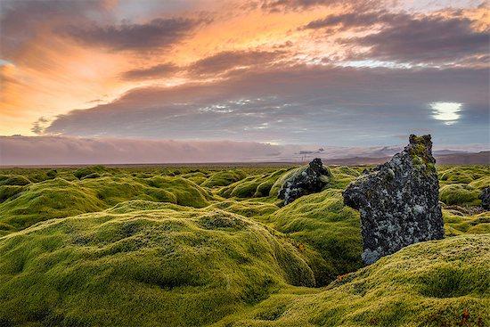 Moss covered landscape at sunset, Eldhraun, Iceland Stock Photo - Premium Royalty-Free, Image code: 649-08328127