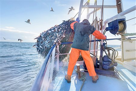 fishing - Fisherman emptying net full of fish into hold on trawler Stock Photo - Premium Royalty-Free, Code: 649-08380968