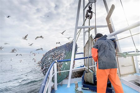 Fisherman emptying net full of fish into hold on trawler Stock Photo - Premium Royalty-Free, Code: 649-08380993