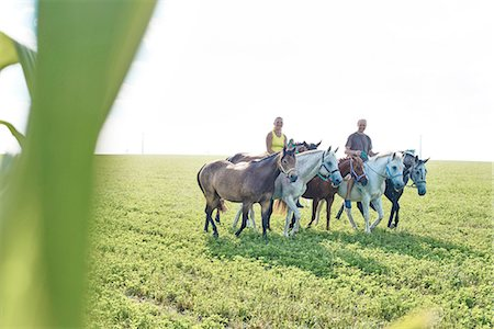 Woman and man riding and leading six horses in field Stock Photo - Premium Royalty-Free, Code: 649-08423426