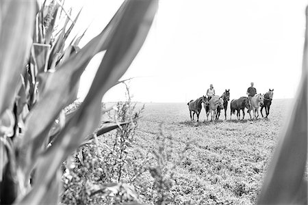 B&W image of man and woman riding and leading six horses in field Stock Photo - Premium Royalty-Free, Code: 649-08423443