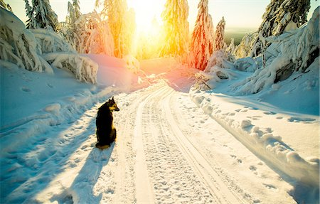 dogs in nature - Dog sitting on snowy road, sunset, Russia Stock Photo - Premium Royalty-Free, Code: 649-08548702
