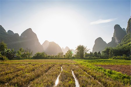 Rice field and Karst Mountains, Guangxi, China Stock Photo - Premium Royalty-Free, Code: 649-08661090