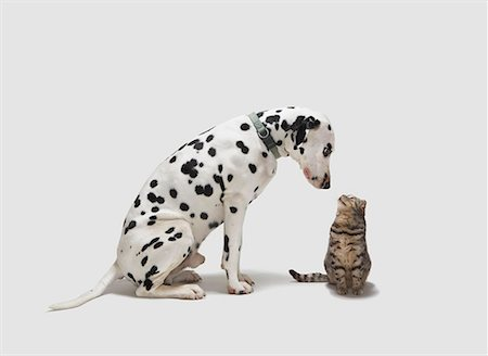 enemy - A dog looking at a cat Stock Photo - Premium Royalty-Free, Code: 649-02055510