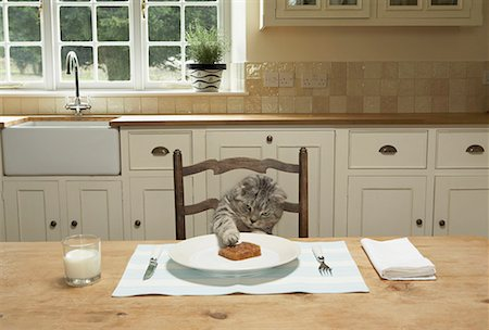 setting kitchen table - A cat eating at the table Stock Photo - Premium Royalty-Free, Code: 649-02055513