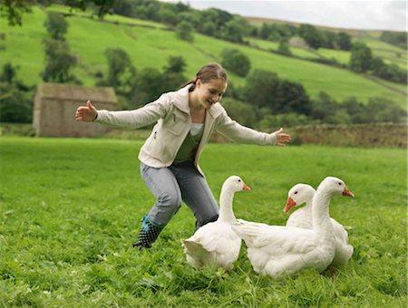 Girl Rounding Up Geese Stock Photo - Premium Royalty-Free, Code: 649-02666594