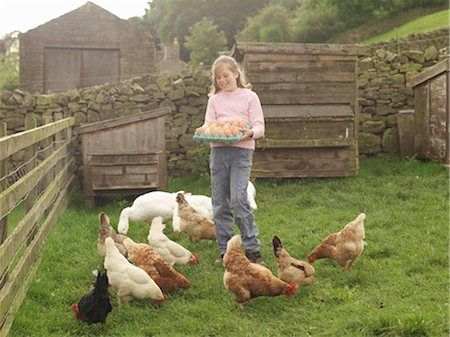 Girl Holding Tray Of Eggs With Hens Stock Photo - Premium Royalty-Free, Code: 649-02666624