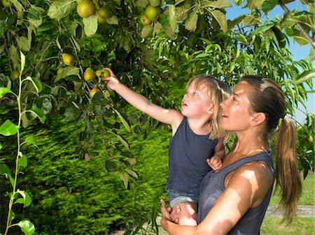 family apple orchard - Woman and girl snatching apples Stock Photo - Premium Royalty-Free, Code: 649-02731644