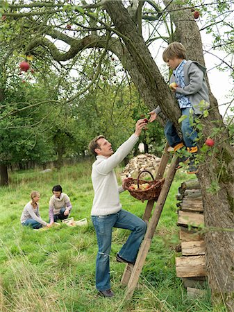 family apple orchard - Father and son apple picking with family Stock Photo - Premium Royalty-Free, Code: 649-03008682