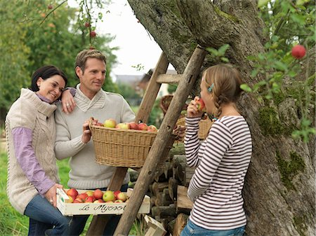 family apple orchard - People picking apples in baskets Stock Photo - Premium Royalty-Free, Code: 649-03008691