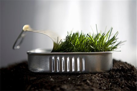 sprout - Grass sprouting in sardine can Stock Photo - Premium Royalty-Free, Code: 649-03010091