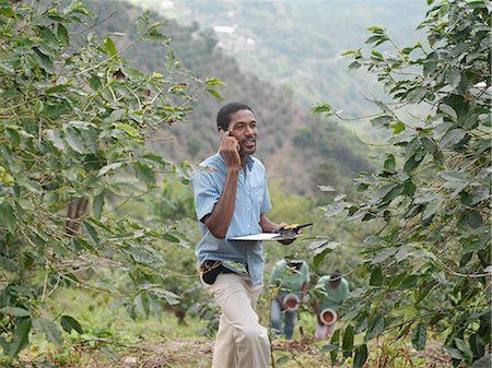farm phone - Coffee Worker Supervisor In Plantation Stock Photo - Premium Royalty-Free, Code: 649-03078270