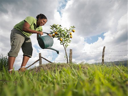 Woman Watering A Young Orange Tree Stock Photo - Premium Royalty-Free, Code: 649-03078317