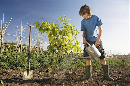 Pre-adolescent boy planting tree Stock Photo - Premium Royalty-Free, Code: 649-03078710