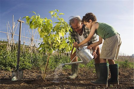 Grandfather and grandson planting tree Stock Photo - Premium Royalty-Free, Code: 649-03078711