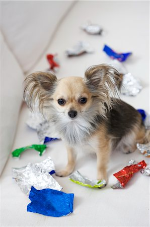 dog with sweet left-overs Stock Photo - Premium Royalty-Free, Code: 649-03362560