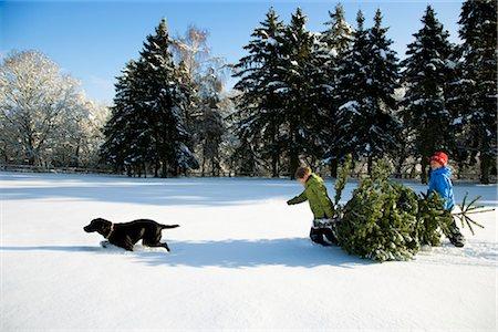snow christmas tree white - Children and dog pulling Christmas tree Stock Photo - Premium Royalty-Free, Code: 649-03417268