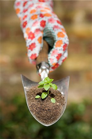 sprout - Hand holding plant on garden trowel Stock Photo - Premium Royalty-Free, Code: 649-03566428