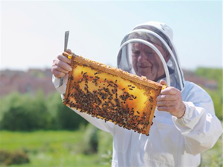 Beekeeper inspects honey comb Stock Photo - Premium Royalty-Free, Code: 649-03566849