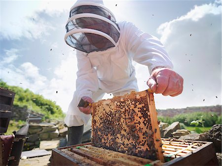 Beekeeper inspects bee hive Stock Photo - Premium Royalty-Free, Code: 649-03566853